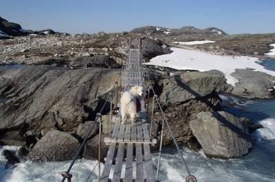 Wandern, Bergsteigen, Trekking (mit Hund) o.Ä. - Bild4