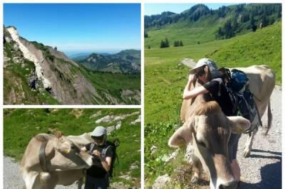 Outdoorpartner/in für Alpinwandern & Klettersteige in Bodenseeregion gesucht - Bild2