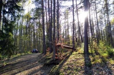 Wald Wasser Entspannung - Bild2